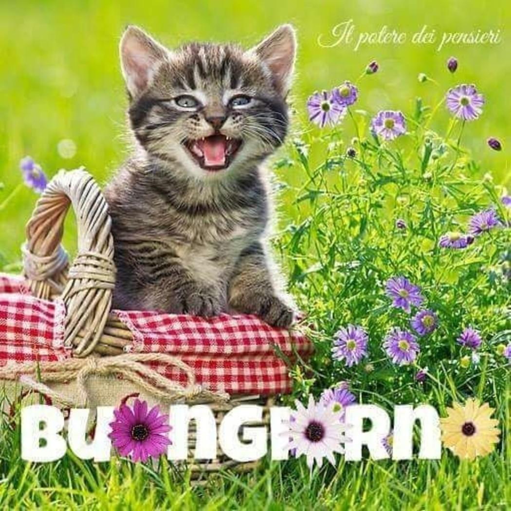 Immagini buongiorno nutella archives for Buongiorno con gattini