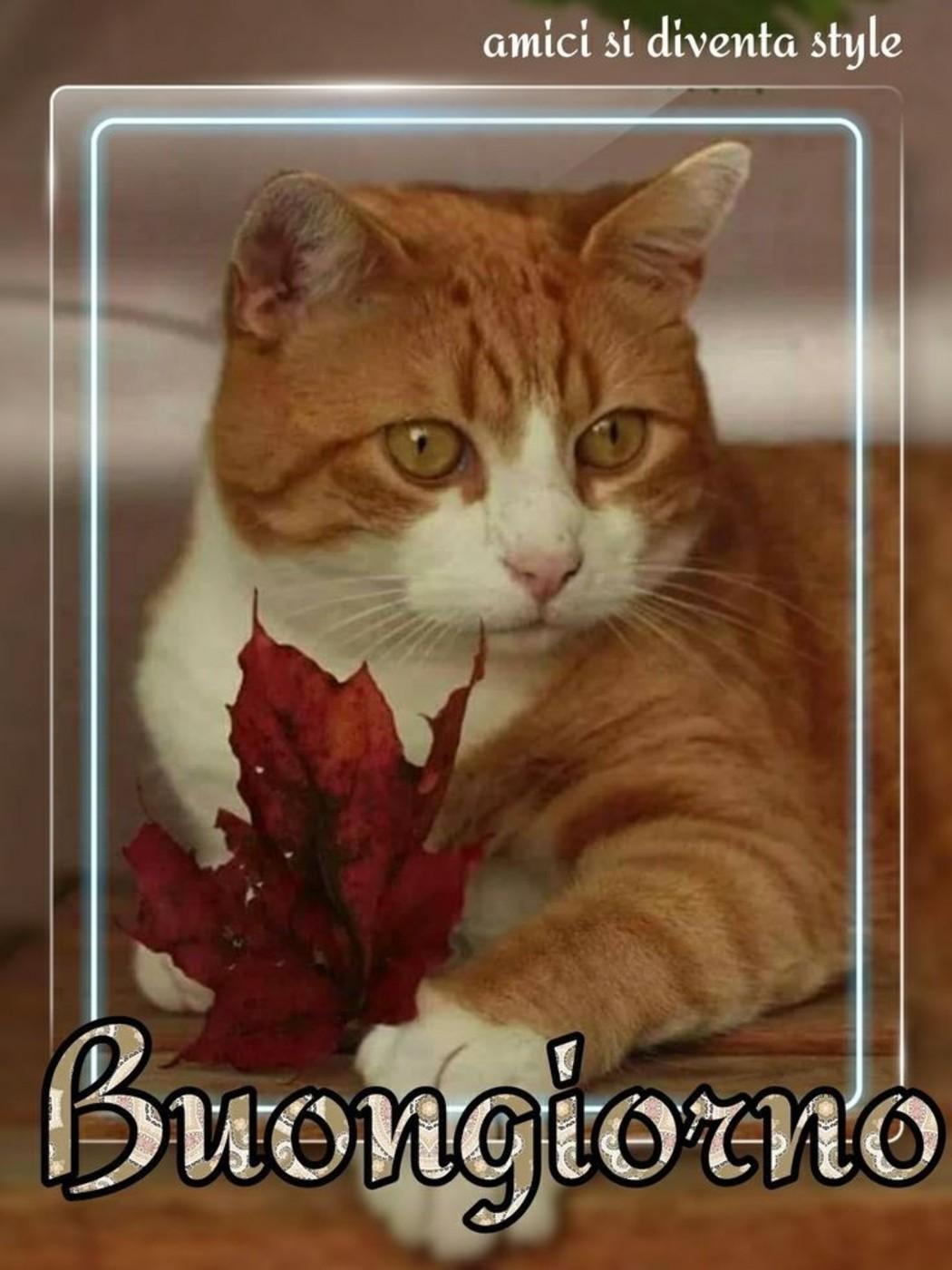 Good morning my firends archives pagina 4 di 7 for Buongiorno con gattini