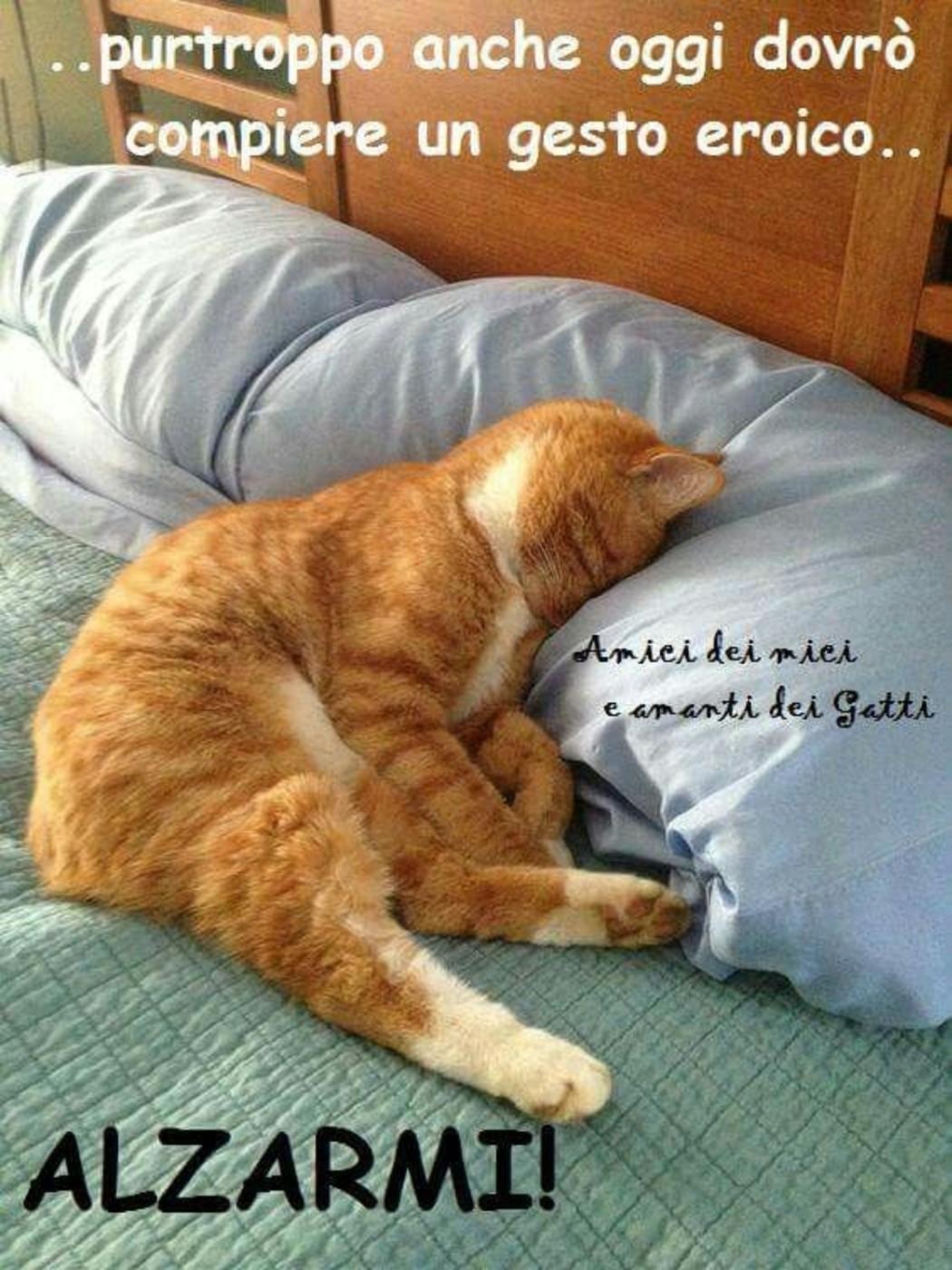 Belle immagini buongiorno con frasi 5 for Buongiorno con gattini