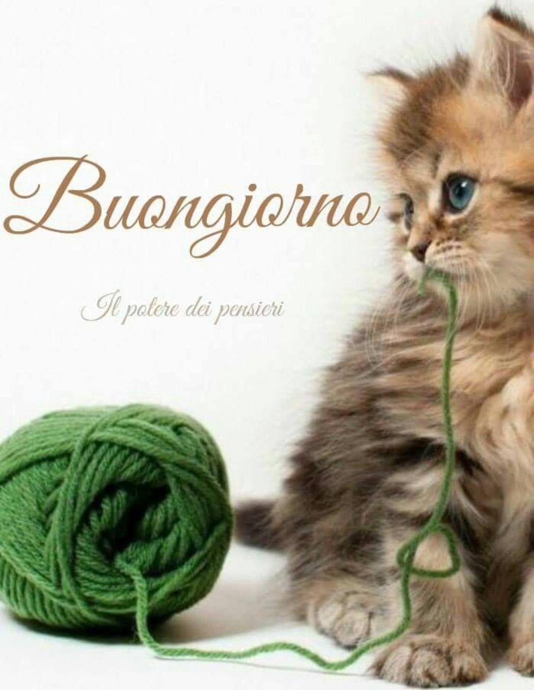 Immagini buongiorno gatti da condividere archives for Buongiorno con gattini