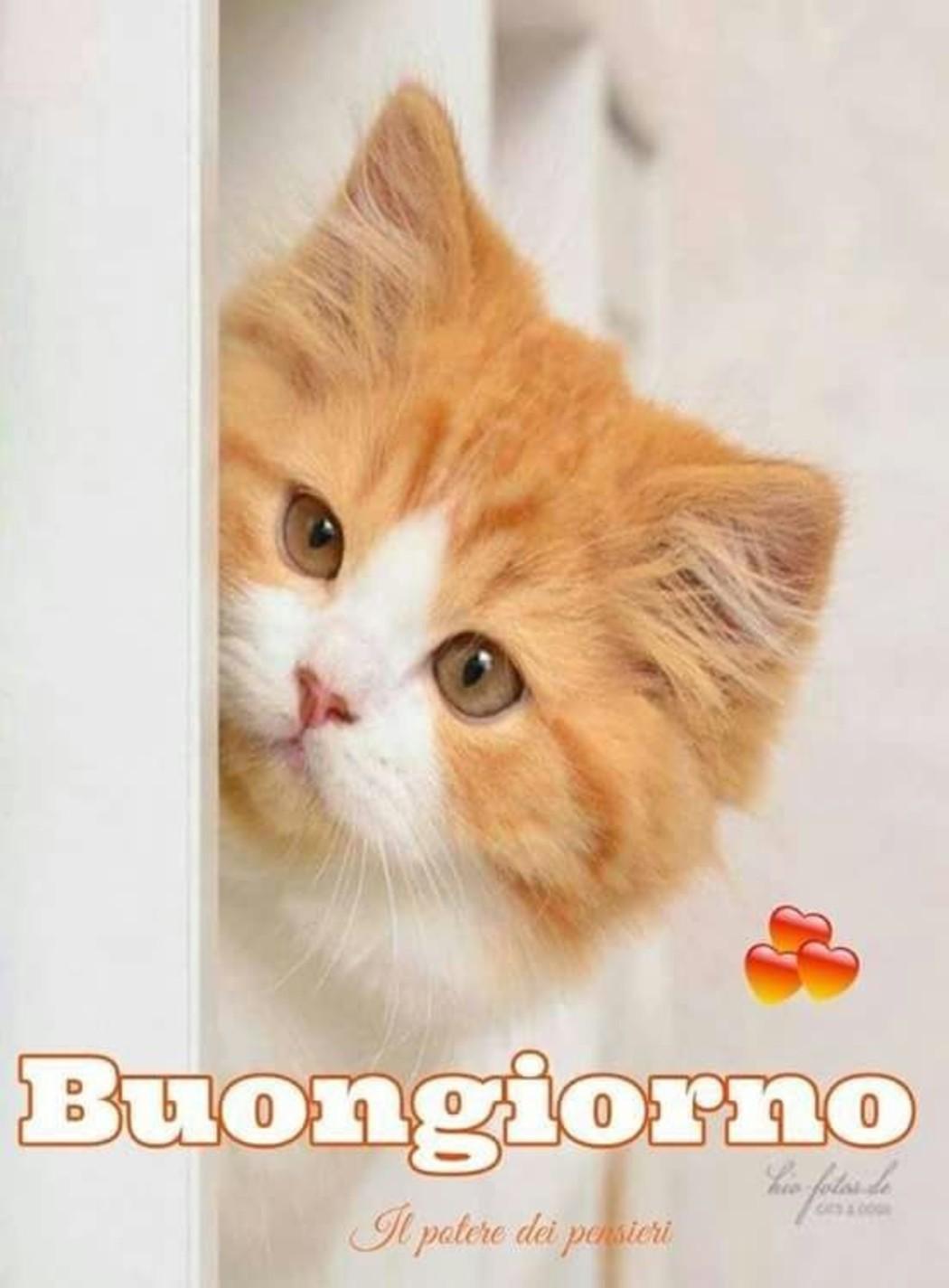 Immagini buongiorno con dolci gattini da condividere for Buongiorno con gattini