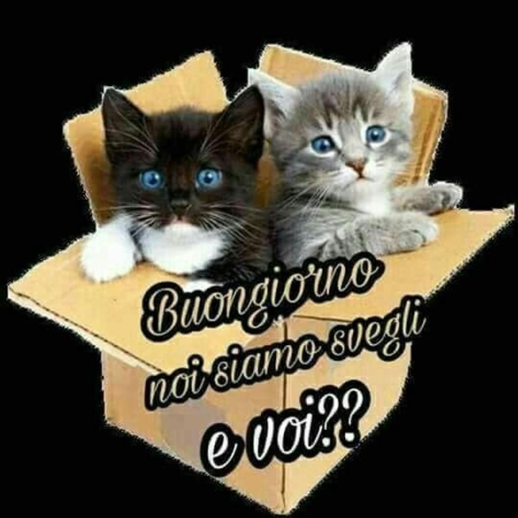 Immagini Buongiorno Con Dolci Gattini Da Condividere 31