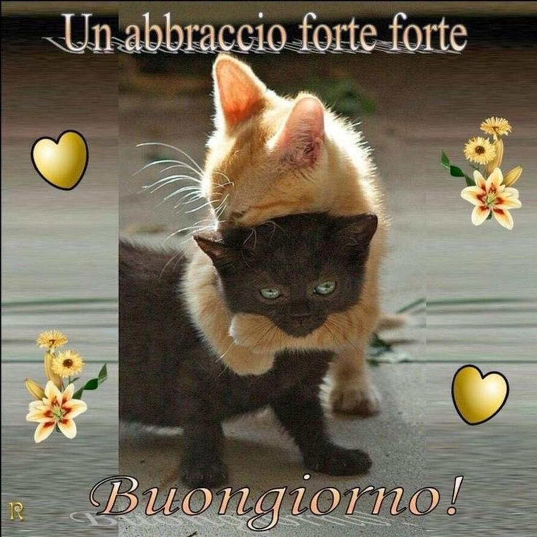 Immagini Buongiorno Con Dolci Gattini Da Condividere