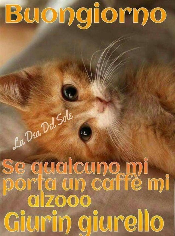 Immagini buongiorno con teneri gattini for Buongiorno con gattini