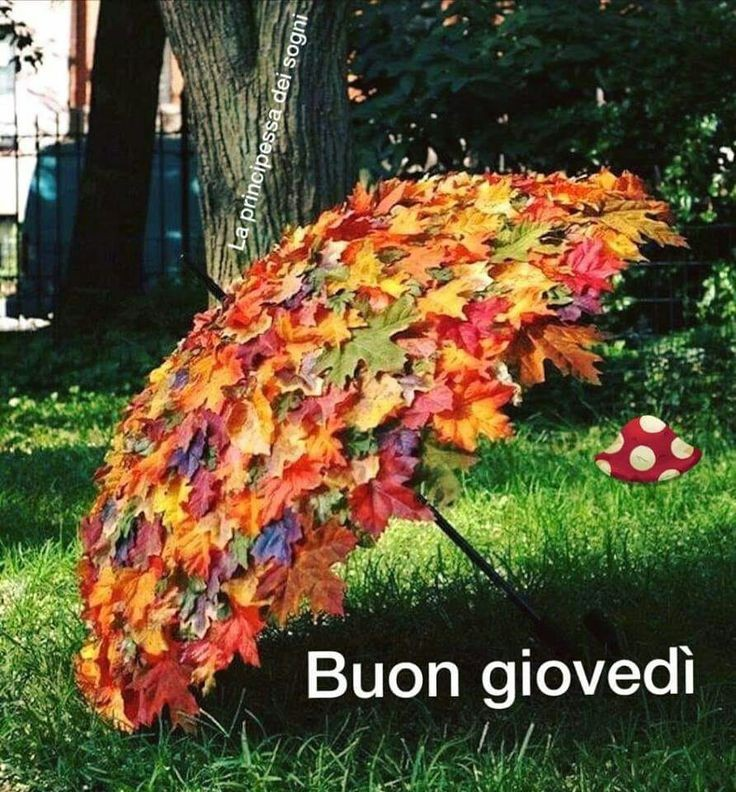 belle immagini buon giovedi autunno piovoso