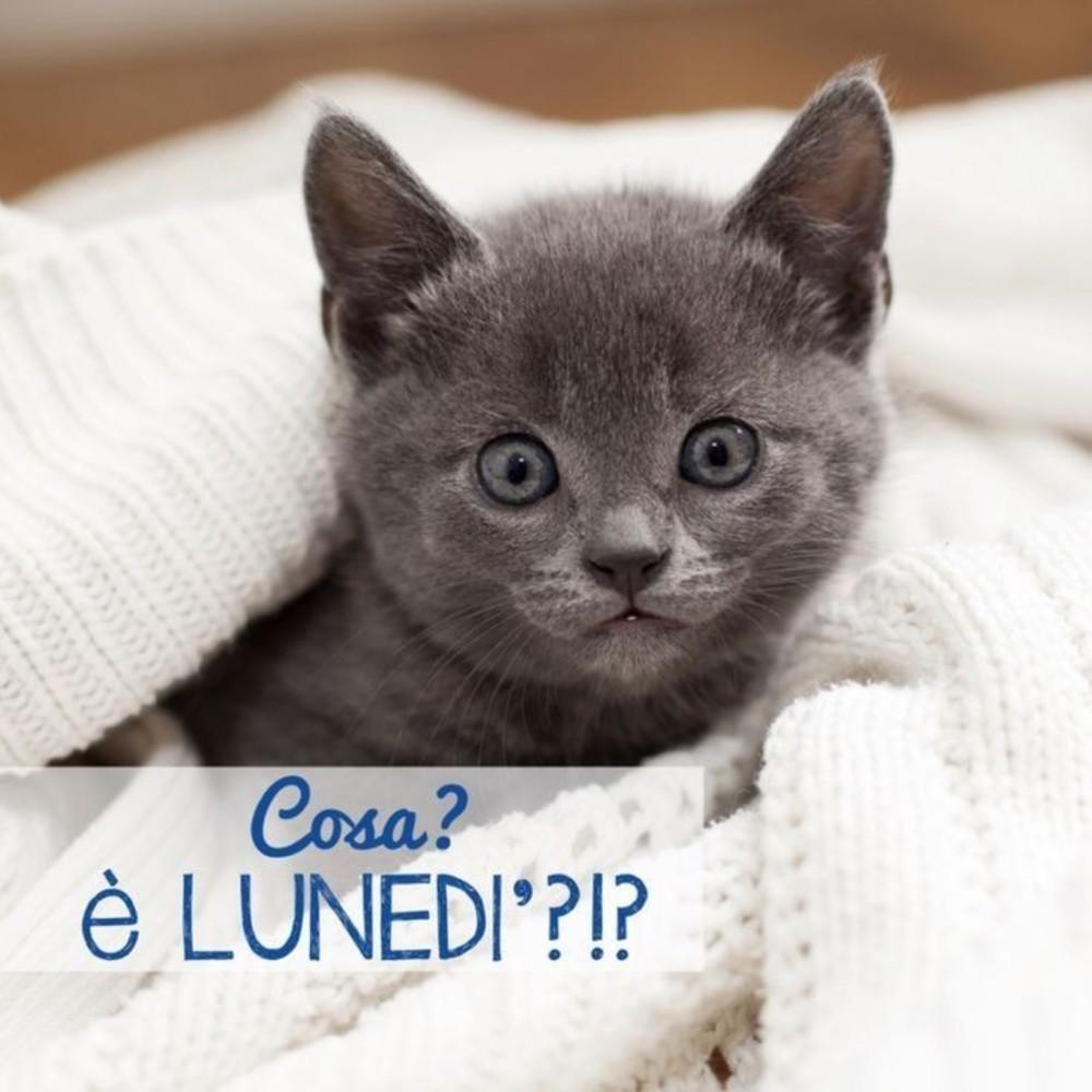 belle immagini buon lunedi gattini (1)