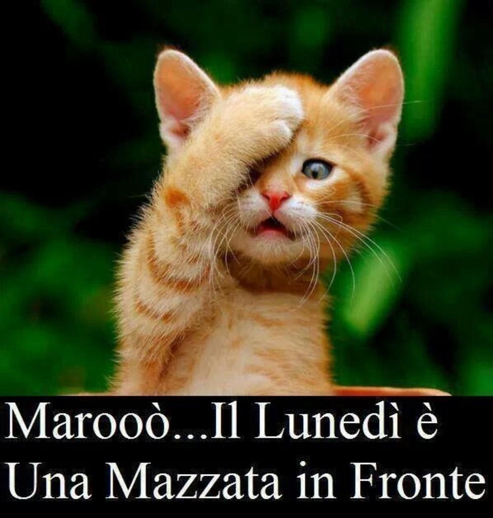 belle immagini buon lunedi gattini (2)