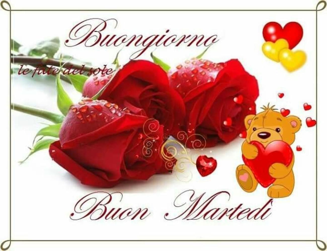 belle immagini buon martedi amore con rose (11)