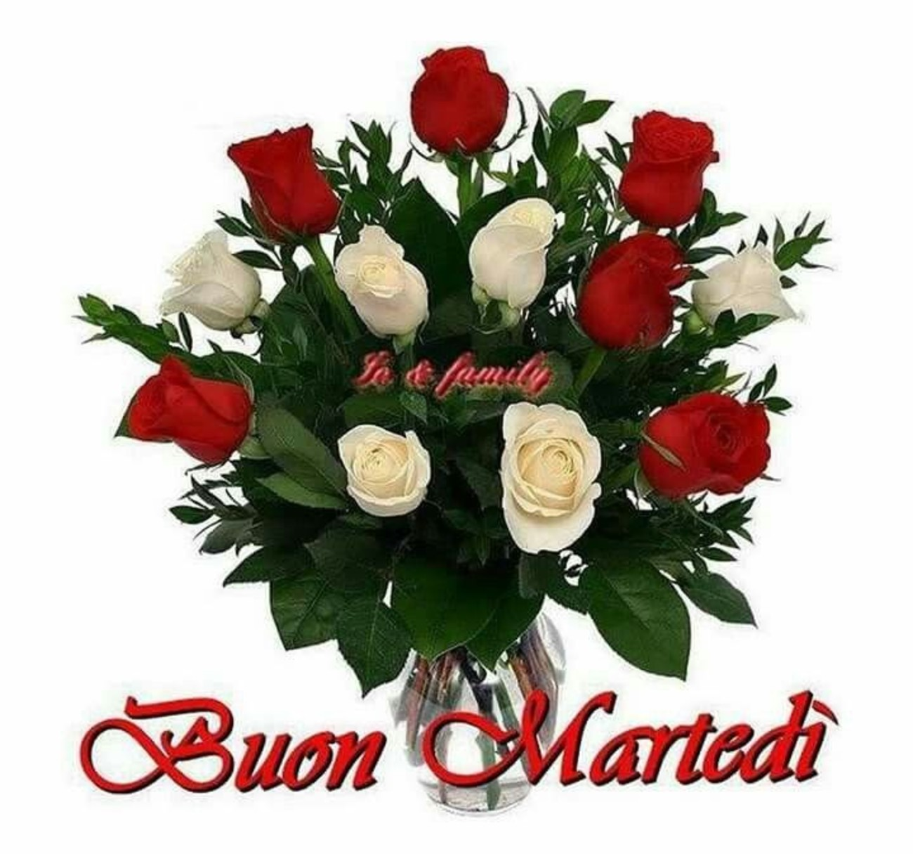 belle immagini buon martedi amore con rose (4)