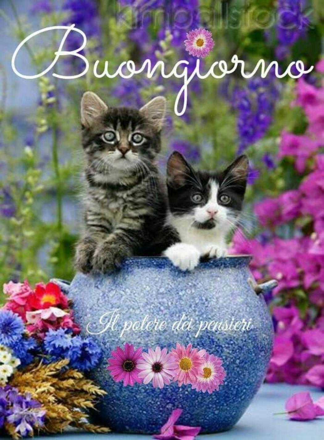 Raggio Di Sole Archives Pagina 75 Di 82 Fotowhatsapp It