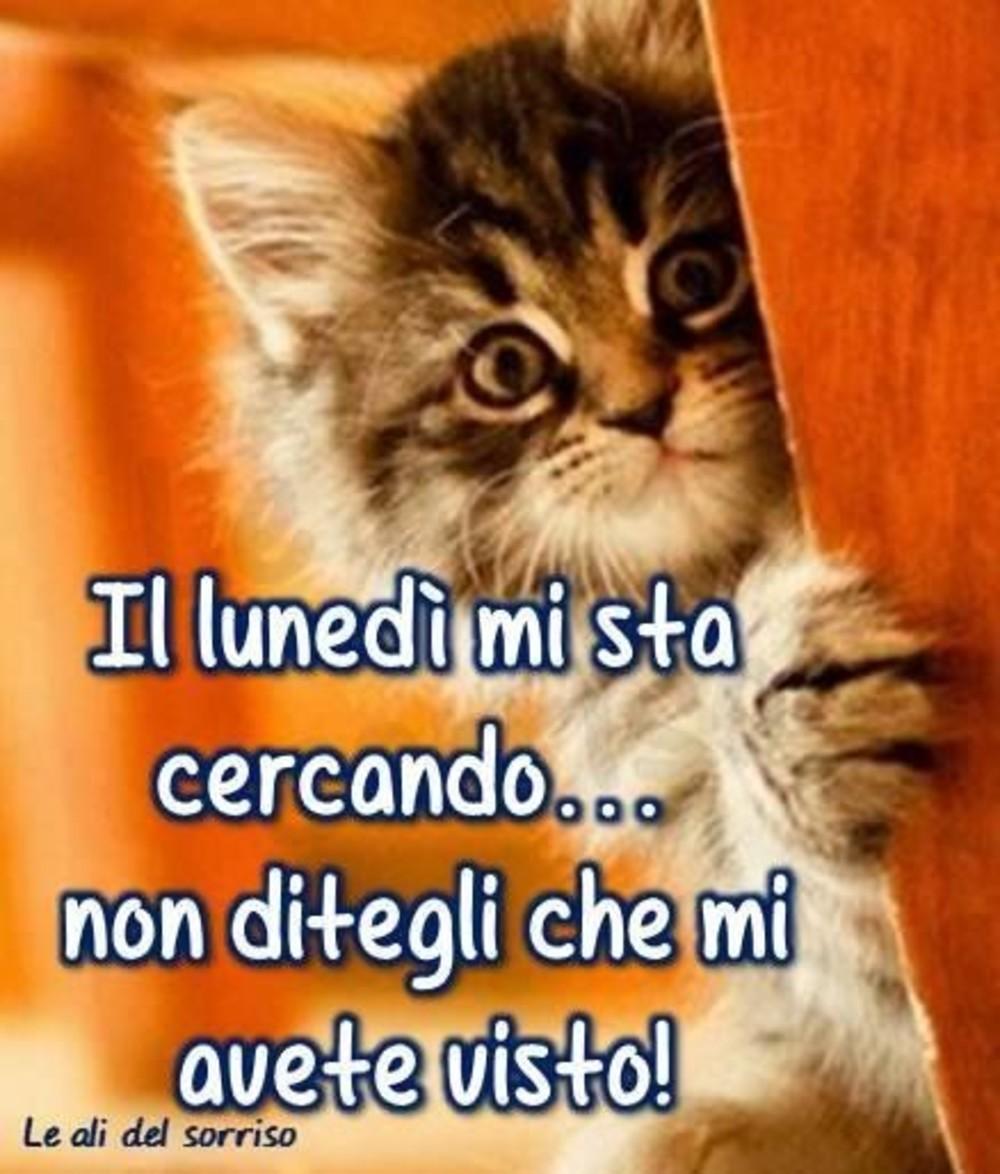 Immagini Buon Lunedi Divertenti Con Gattini Fotowhatsappit