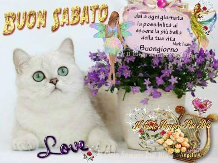 Belle imamgini buon sabato con dolci gattini for Buongiorno con gattini