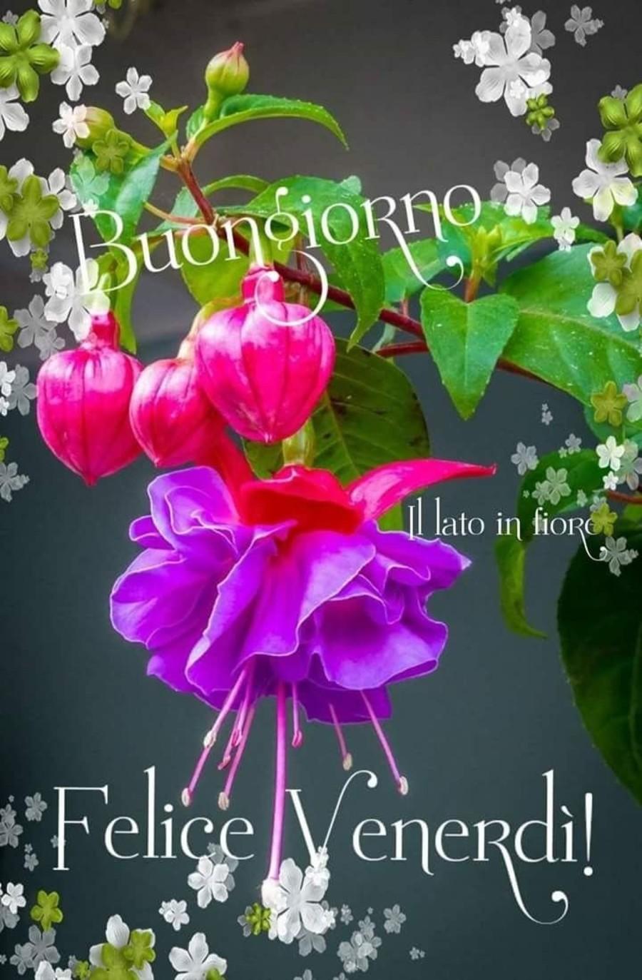 Immagini Buongiorno Felice Venerdi Primavera Fotowhatsapp It
